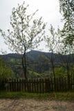 Bäume durch die Straße auf Dorf Stockfotografie