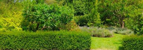 Bäume, eine Hecke und ein Rasen in einem Sommer parken Breites Foto stockbilder