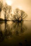 Bäume in einem überschwemmten Fluss. Stockfotografie