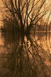 Bäume in einem überschwemmten Fluss. Lizenzfreies Stockfoto