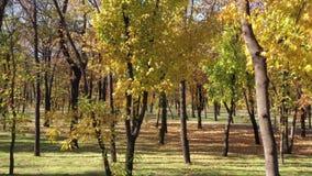 Bäume in einem allgemeinen Park im Fall stock footage