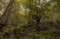 Bäume in einem erstaunlichen Wald Lizenzfreies Stockbild