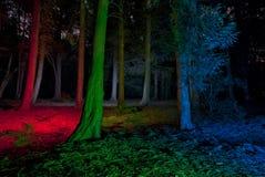Bäume in einem forrest - Leuchte malte Stockbilder
