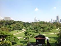 Bäume in einem grünen Park in Tokyo Stockbild