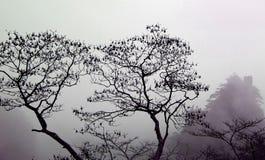 Bäume in einem Nebel Lizenzfreie Stockfotografie