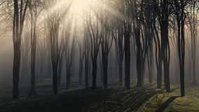 Bäume an einem nebeligen Tag Stockbilder