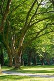 Bäume in einem Park Lizenzfreie Stockbilder