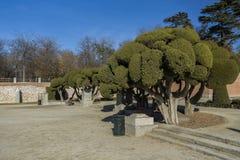 Bäume in einem Park Lizenzfreie Stockfotos