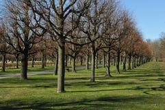 Bäume in einem Park Stockfotos
