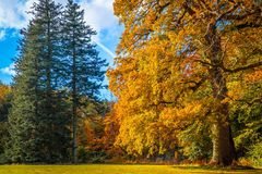 Bäume in einem Park im Fall Stockfotos