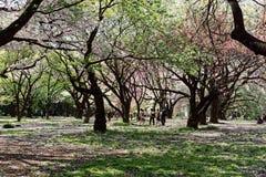 Bäume in einem Park in Tokyo lizenzfreie stockfotografie