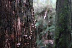 Bäume in einem Regenwald lizenzfreies stockfoto