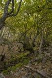 Bäume in einem Wald lizenzfreies stockbild