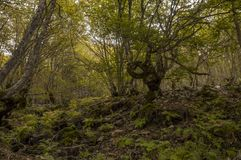 Bäume in einem Wald stockfotografie