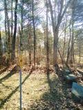 Bäume in einem Waldland Stockfoto