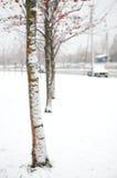 Bäume einer Eberesche nach Schneefälle Lizenzfreie Stockfotos
