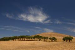 Bäume in einer Reihe Stockfoto