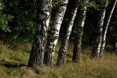 Bäume in einer Reihe Stockbild