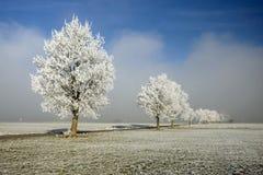 Bäume in einer Reihe Stockfotografie
