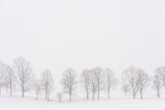 Bäume in einer weißen Landschaft während der Schneefälle Stockfotos