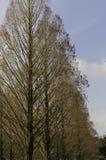 Bäume in einer Zeile Stockfotografie