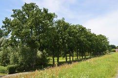 Bäume in einer Zeile Stockbild