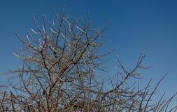 Bäume eingefroren im Eis stockbild