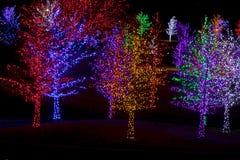 Bäume eingewickelt in LED-Lichtern für Weihnachten Stockfotografie