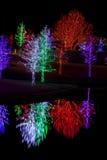 Bäume eingewickelt in LED-Lichtern für Weihnachten Lizenzfreies Stockfoto
