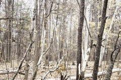 Bäume Ende des Herbstes/früh des Winters Stockfotografie
