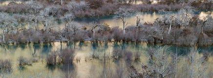 Bäume entlang dem Fluss lizenzfreies stockbild