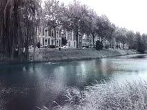 Bäume entlang dem Fluss Lizenzfreie Stockfotos