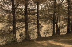 Bäume entlang der Flussbank Stockfoto