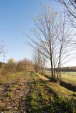 Bäume entlang der Spur Lizenzfreie Stockfotos
