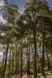 Bäume entlang der Straße im Park von Sintra stockfotos