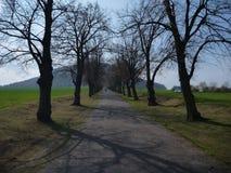 Bäume entlang der Straße zum tschechischen Gebirgsriss Stockfotografie