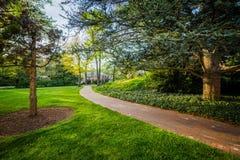 Bäume entlang einem Gehweg an den Universität John Hopkins, in Baltimore, stockbilder