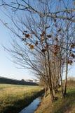 Bäume entlang einem kleinen Fluss Lizenzfreies Stockfoto