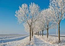 Bäume entlang einer Forderung durchgesetzt im Schnee Stockfotografie