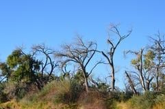 Bäume entlang Rio Grande Lizenzfreies Stockfoto