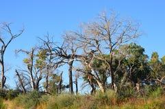 Bäume entlang Rio Grande Stockfotografie