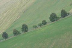 Bäume entlang Straße Stockfotos