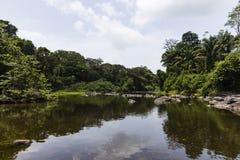 Bäume entlang und Felsen im Fluss Stockfoto