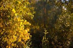Bäume entlang Weg Lizenzfreies Stockbild