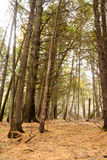 Bäume für den Wald Stockfotografie