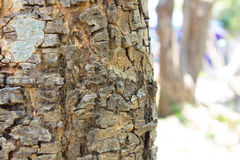 Bäume für Design und Hintergrund Stockfotografie