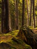 Bäume, Felsen und Moos Stockfotos