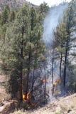 Bäume in Flammen Lizenzfreie Stockbilder