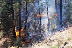 Bäume in Flammen Lizenzfreie Stockfotografie