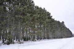 Bäume in Folge ausgerichtet im Winterschnee Stockfotos